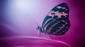 Превью обои бабочка, крылья, макро, поверхность, лепесток