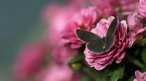 Превью обои бабочка, лепестки, цветок, крылья