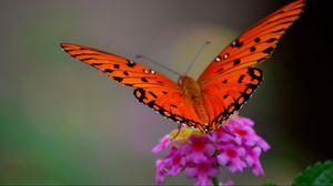 Превью обои бабочка, цветок, макро, лепестки, крылья