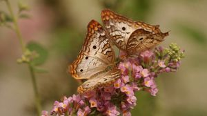 Превью обои бабочки, пара, цветы, крылья, узоры