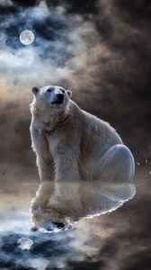 Превью обои белый медведь, полярный медведь, океан, отражение, млекопитающее