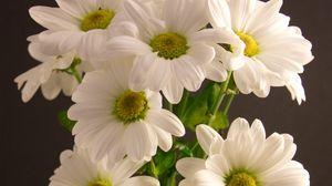 Превью обои букет, цветы, лепестки, белый