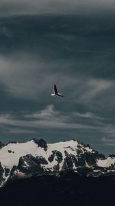 Превью обои чайка, птица, полет, гора, природа