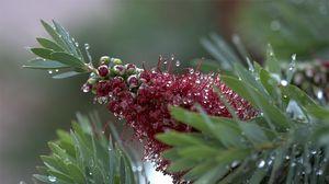 Превью обои цветок, бутон, капли, роса, листья