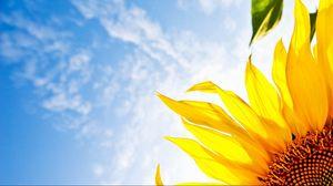 Превью обои цветок, подсолнух, небо, облака