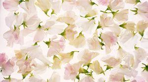 Превью обои цветы, бутоны, лепестки, светлый