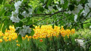 Превью обои цветы, дерево, сад, тюльпаны, весна