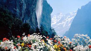 Превью обои цветы, горы, обрыв