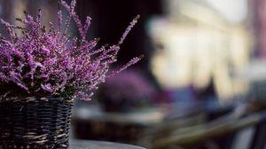 Превью обои цветы, корзинка, растение