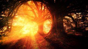 Превью обои деревья, осень, солнечный свет, лес, свет