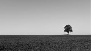 Превью обои дерево, минимализм, чб, горизонт, поле