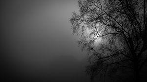 Превью обои дерево, силуэт, ночь, луна, чб