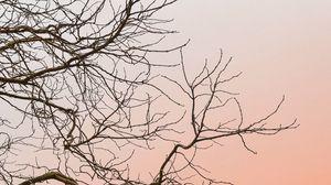 Превью обои дерево, ветки, небо, минимализм