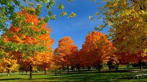 Превью обои деревья, парк, осень, трава, листва
