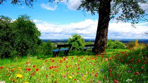 Превью обои деревья, скамейки, цветы, природа