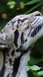 Превью обои дымчатый леопард, дикая кошка, морда, пятнистый