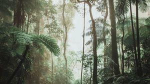 Превью обои джунгли, лес, лианы, деревья