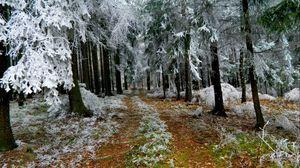 Превью обои ели, иней, зима, дорога, земля, ветви