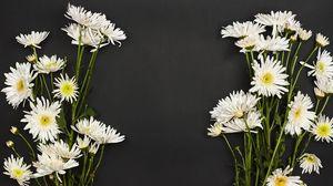 Превью обои хризантемы, цветы, букет, белый