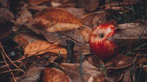 Превью обои яблоки, листья, трава, осень, урожай