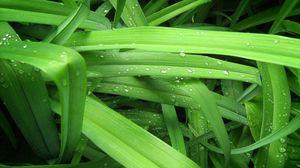Превью обои капли, трава, фон, зелень