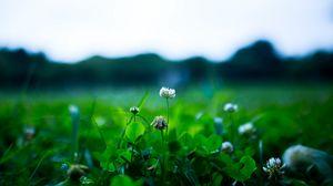Превью обои клевер, цветок, растение, зелень, весна
