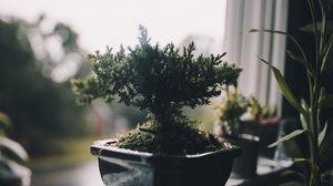 Превью обои комнатное растение, горшок, окно