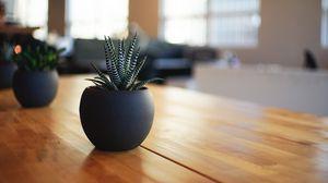 Превью обои комнатное растение, горшок, стол