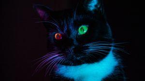 Превью обои кошка, гетерохромия, глаза, разноцветный, взгляд