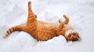 Превью обои кошка, кот, рыжий, лапы, лежит, снег, зима, природа