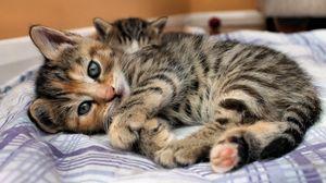 Превью обои кошка, котенок, лежит, кровать, глаза, взгляд, полоски