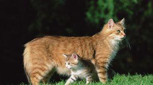 Превью обои кошка, котёнок, трава