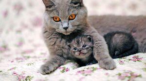 Превью обои кот, кошка, котенок, забота, нежность
