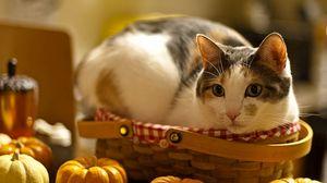 Превью обои кот, лежать, корзина, тыква, любопытство