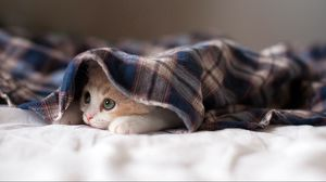 Превью обои кот, лежать, котенок, игривый