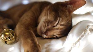 Превью обои кот, лежать, морда, взгляд