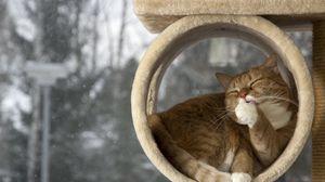 Превью обои кот, лежать, облизываться, отдых