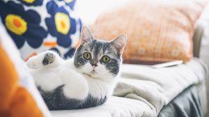 Превью обои кот, лежит, прикольный