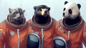 Превью обои кот, медведь, панда, костюм, рисунок