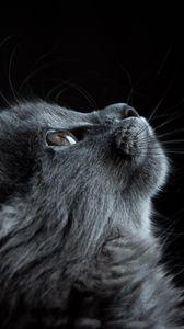 Превью обои кот, морда, профиль, черный фон