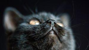 Превью обои кот, нос, питомец, пушистый, черный