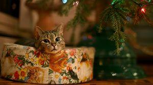 Превью обои кот, новый год, елка, гирлянда