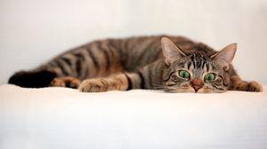 Превью обои кот, полосатый, взгляд, удивление, лежать