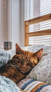 Превью обои кот, сон, постель, уют
