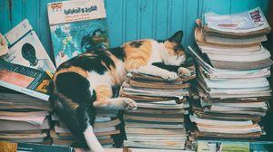 Превью обои кот, сон, журналы, отдых, книги