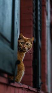 Превью обои кот, выглядывать, взгляд, удивление