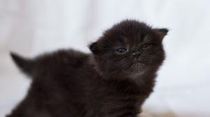 Превью обои котенок, черный, фотосессия, малыш