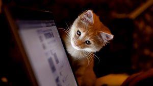 Превью обои котенок, компьютер, любопытство