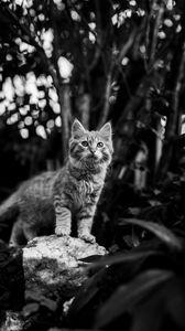 Превью обои котенок, кошка, питомец, животное, чб
