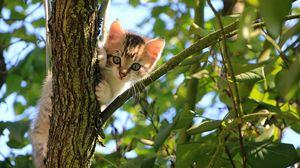 Превью обои котенок, кот, дерево, милый, забавный